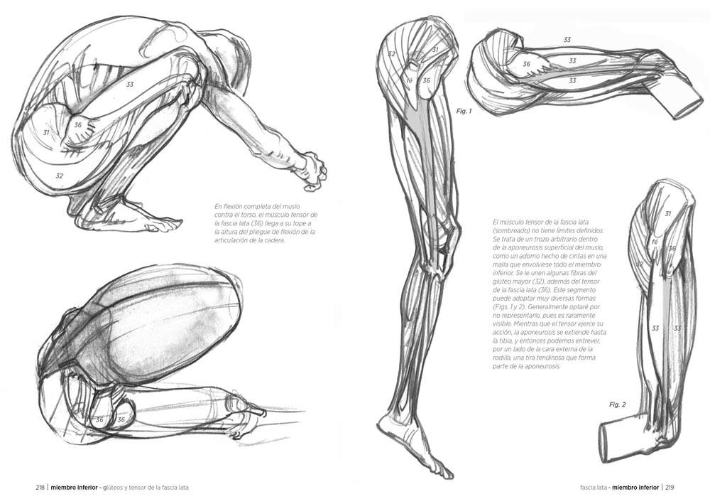 Anatomía artística, de Michel Lauricella - Editorial GG